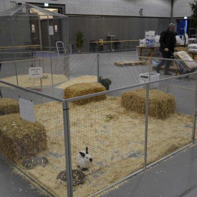 Kanin løbegårde