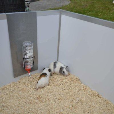 Drikkedunk til Randers Volieren marsvinbur