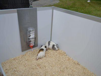 Drikkeflaskeholder til Randers Volieren marsvinbur