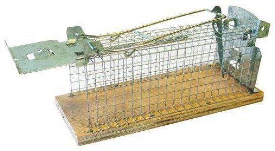 Rottefælde til levende fangst Randers Volieren