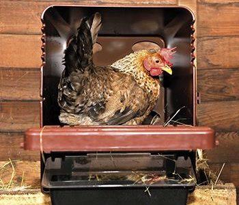 Redekasser til høns