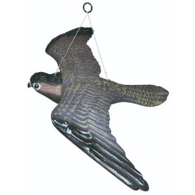 Flyvende rovfugle skræmmer   Randers volieren