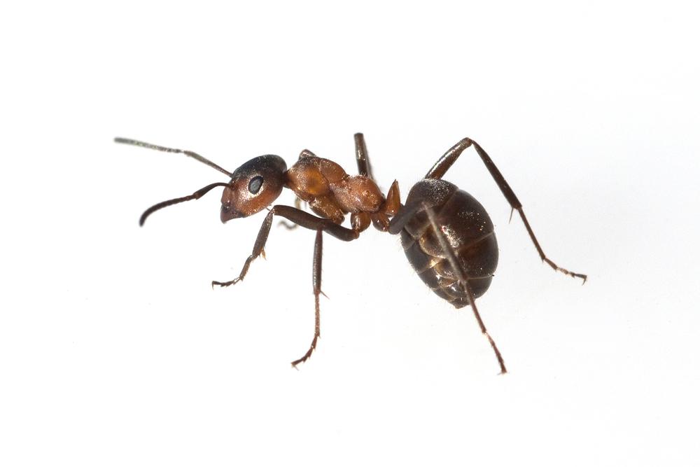 Myre | Randers volieren