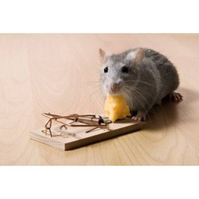 Mus og rotte bekæmpelse
