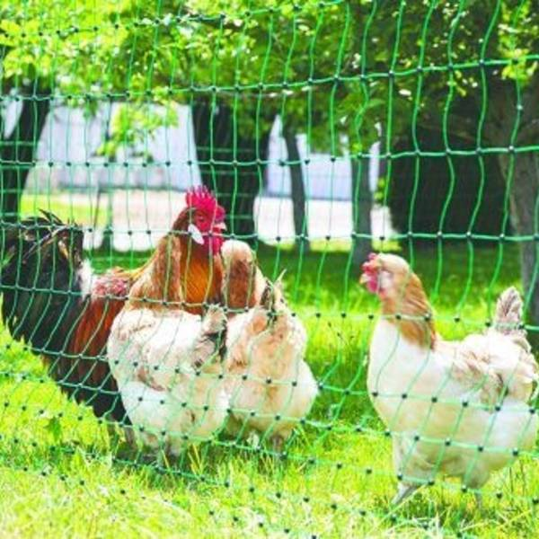 Flytbar hønsehegn | Randers volieren